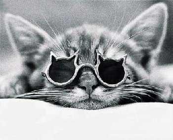 kacamata kucing