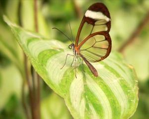 butterfly_-_best_wallpapers