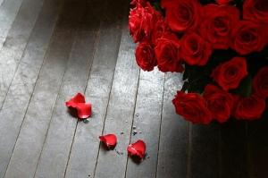 1d91e_rose_red_flower_1297953820_44aebcd24e